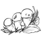 Schwärzen Sie porcini die essbare Pilzskizzen-Artillustration mit tinte, die auf weißem Hintergrund lokalisiert wird Lizenzfreie Stockfotos