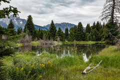 Schwabacher Landing in the Grand Tetons Stock Photography