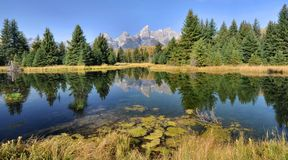 Schwabacher Landing Reflections Stock Photo
