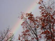 Schwacher Regenbogen über Herbstbäumen Stockbild