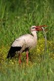 Schwalbe des weißen Storchs eine große Schlange lizenzfreie stockbilder