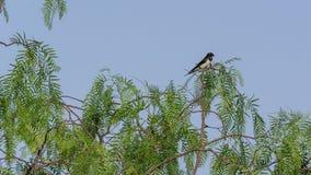 Schwalbe in einem Baum, Kefalonia Griechenland stockbild