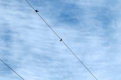 Schwalben auf einem Draht Stockfotos