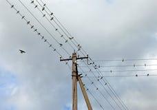 Schwalben auf elektrischen Drähten Lizenzfreies Stockfoto
