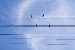 Schwalben, die auf Drähten über blauem Himmel des Sommers sitzen lizenzfreie stockbilder