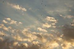 Schwalben, die in den Himmel während des Sonnenuntergangs fliegen Stockbilder