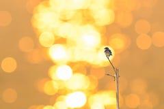 Schwalben und Sonnen reflektieren den Sonnenaufgang stockbild