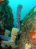 Schwamm-Koralle lizenzfreie stockbilder