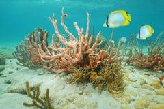 Schwamm mit karibischem Meer der Koralle und der Fische Stockfotografie