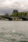 Schwan auf dem Fluss die Seine Stockbilder