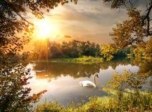 Schwan auf dem Teich Lizenzfreie Stockbilder