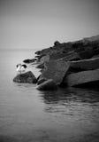 Schwan auf felsiger Küstenlinie Stockbilder