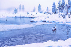 Schwan in einem mystischen See Stockbild