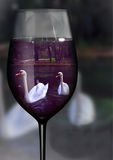 Schwan im Glas Stockbild