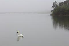 Schwan am Nebel-Morgen Lizenzfreie Stockfotografie