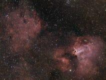 Schwan-Nebelfleck stockbilder