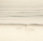 Schwan und eine Seemöwe im Nebel. Lizenzfreie Stockfotos