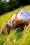 Schwangere Frau, die im Gras liegt stockbilder