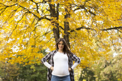 Schwangere Frau im Herbstpark Stockfotos