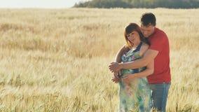 Schwangere Frau und ihr Ehemann, die zusammen auf dem Bauch in der Natur im Freien auf Feld umarmt stock footage