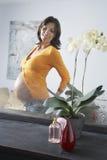 Schwangere Frauen-bewundern Magen im Spiegel Stockbilder