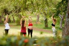 Schwangere Frauen, die Yoga mit persönlichem Trainer In Park tun Lizenzfreie Stockfotografie