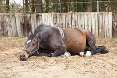 Schwangere Stute stockfoto