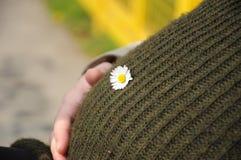 Schwangerer Bauch am Frühling Lizenzfreie Stockfotos