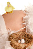 Schwangerer Bauch mit Nest und Eiern Stockfotos