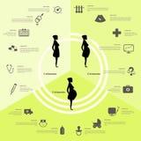 Schwangerschaft und Geburt infographics, Schwangerschaftsstadien Lizenzfreie Stockfotos