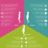 Schwangerschaft und Geburtsinfographics und -stadien Stockbild