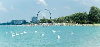 Schwanmenge auf dem Balaton See in Siofok mit Riesenrad herein Th Stockfotografie