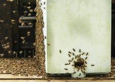 Schwarm von Bienen Stockfoto