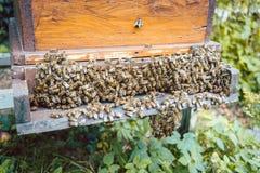 Schwarm von Bienen auf einem beehouse Lizenzfreie Stockbilder