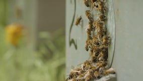 Schwarm von Bienen fliegt in den Bienenstock im Garten auf Natur, Bienenzucht, wildes Leben von Insekten, Schönheitsbegriff in de stock video