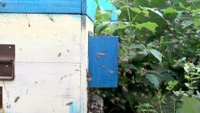 Schwarm von Bienen nahe einem Bienenstock stock video footage