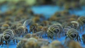 Schwarm von Bienen vor einem Bienehaus stock video footage