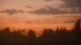 Schwarm von Zuckmücken und von Moskitos stock video footage