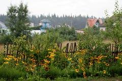Schwarz-äugige Susan-Blüte auf dem Bretterzaun im Dorf stockfotografie