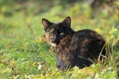 Schwarz-und-braune Katze Lizenzfreie Stockbilder