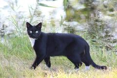 Schwarz-weiße Katze im Wald Lizenzfreie Stockfotografie