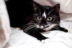 Schwarz-weiße Katze unter einer Decke Lizenzfreie Stockfotografie