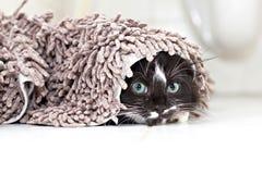 Schwarz-weißes versteckendes und spähendes Kätzchen Stockfotos