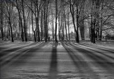 Schwarz-Weißer Geist-Wald Stockfotos
