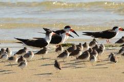 Schwarze Abstreicheisen auf einem sandigen Strand Lizenzfreies Stockfoto