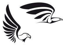 Schwarze Adler vektor abbildung