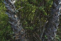 Schwarze Affen auf Kiesweise Stockfotografie