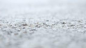 Schwarze Ameisen, die Hintergrund gehen stock footage