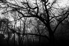 Schwarze Bäume lizenzfreie stockfotos