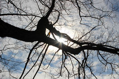 Schwarze Bäume unter blauem Himmel Stockbild